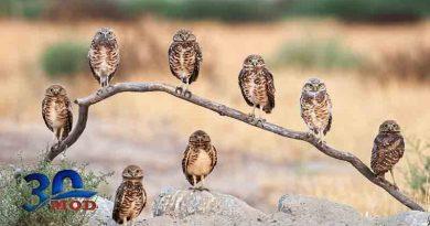 عکسای منتخب از پرندگان